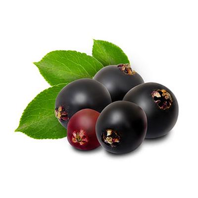 Elderberry is an ingredient in Superfood Tabs